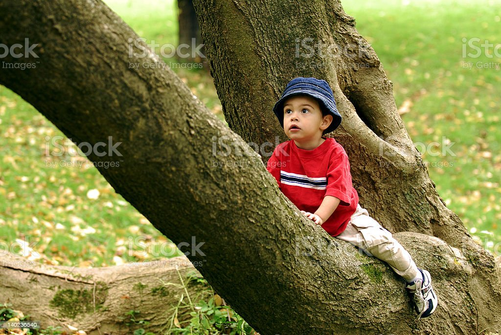 Little Tree Climber royalty-free stock photo