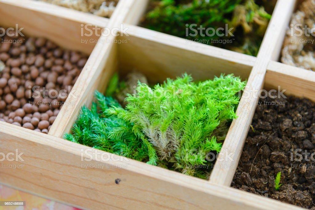 little tree for tree art in wooden bucket box zbiór zdjęć royalty-free