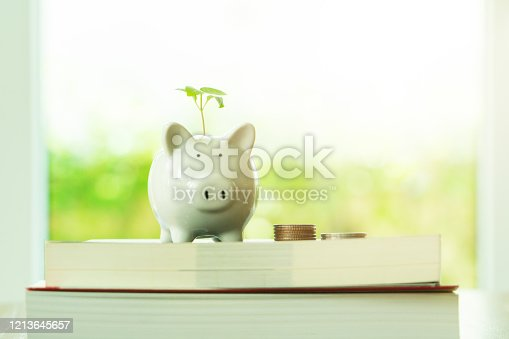 little tree growing on saving piggy bank on book in saving money for education concept