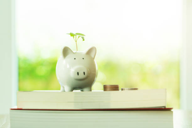 little tree growing on saving piggy bank on book in saving money for education concept stock photo