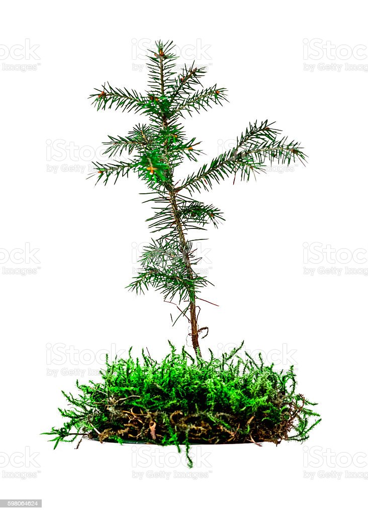 Little tree in moss stock photo