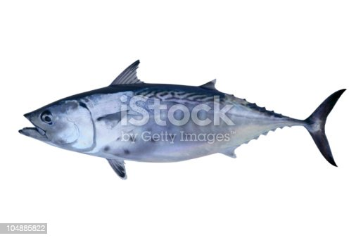 istock Little tunny catch tuna fish seafood 104885822
