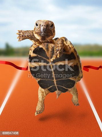 istock Little turtle runner wins by crossing the finish line 638347438