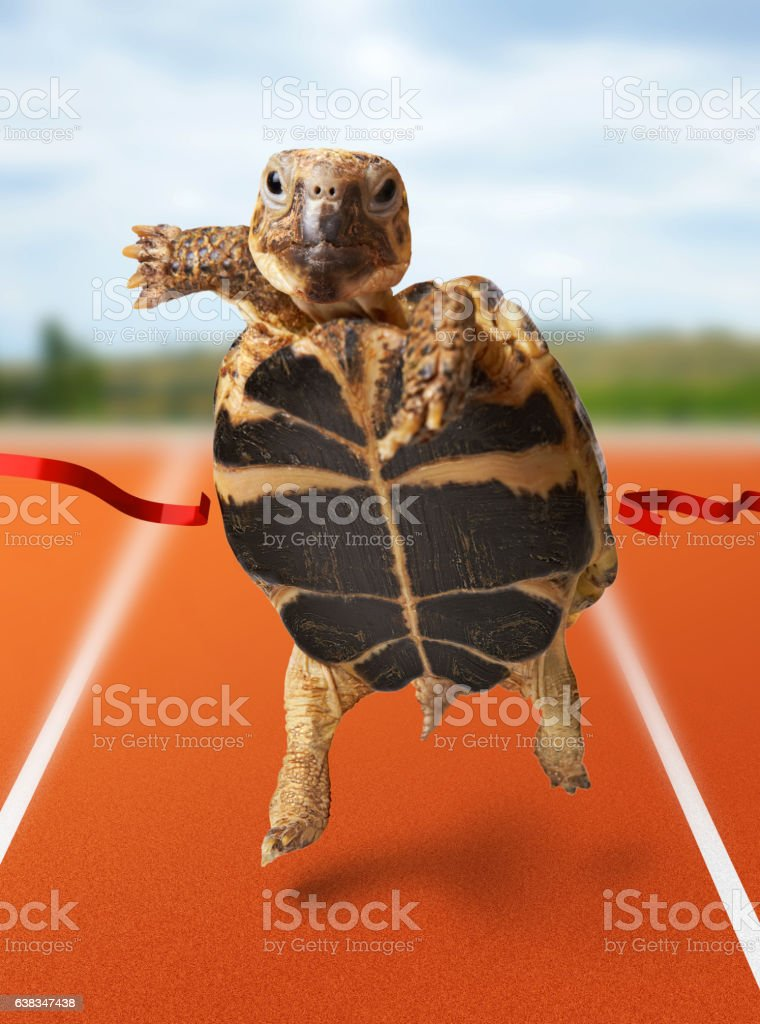 Little turtle runner wins by crossing the finish line stock photo