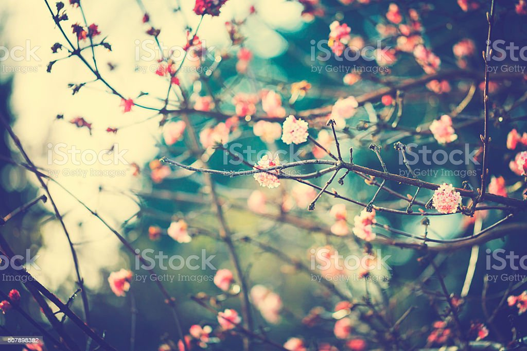 Little viburnum in winter stock photo
