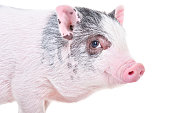 istock Little Vietnamese piggy, closeup, isolated on white background 1217094766