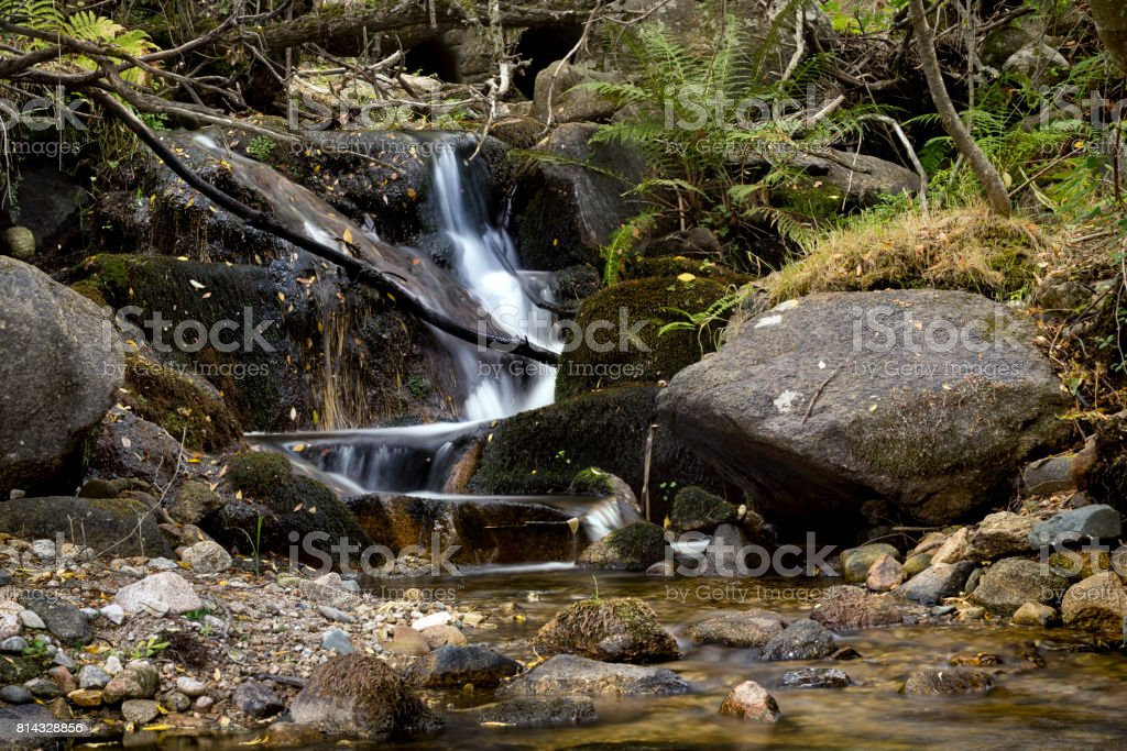 Little cascada en el bosque - foto de stock
