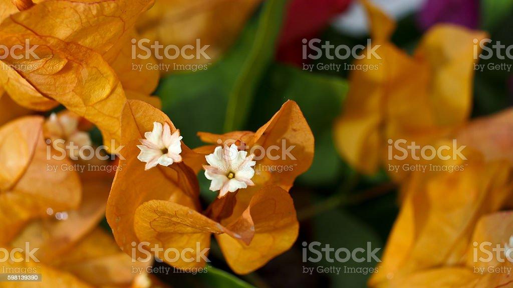 Little White Flower In Yellow Stock Photo Istock