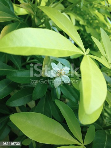 A Little White Flower - Stockowe zdjęcia i więcej obrazów Bez ludzi