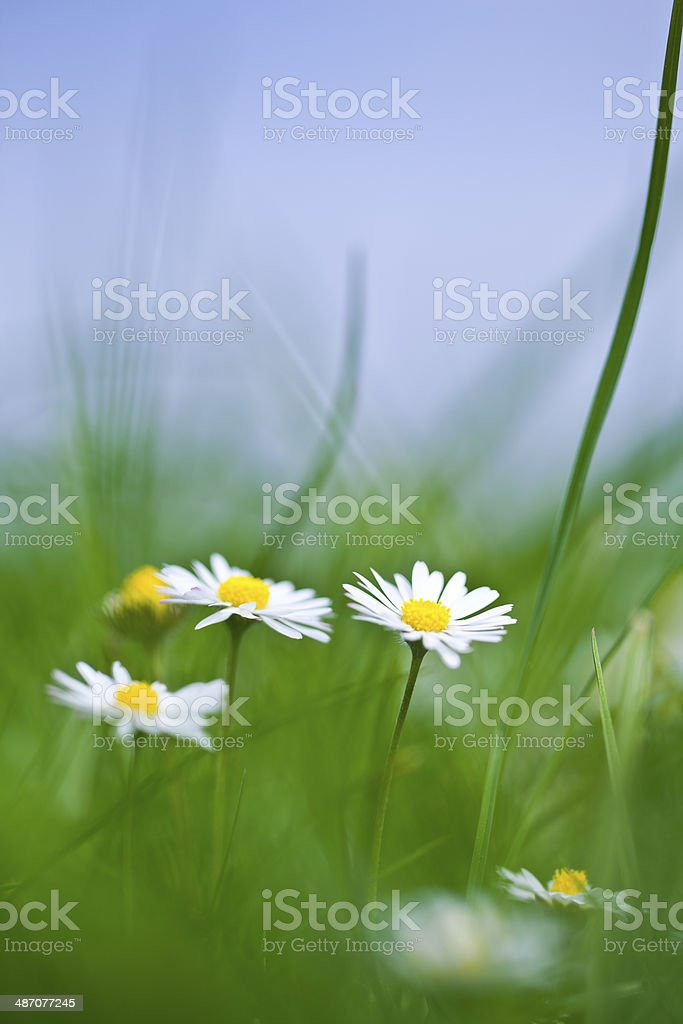 Little white flowers stock photo