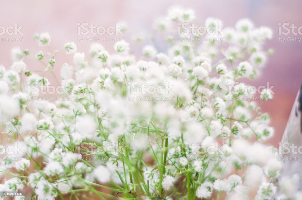 Little White Flowers With Pink Background Stock Photo & More ...