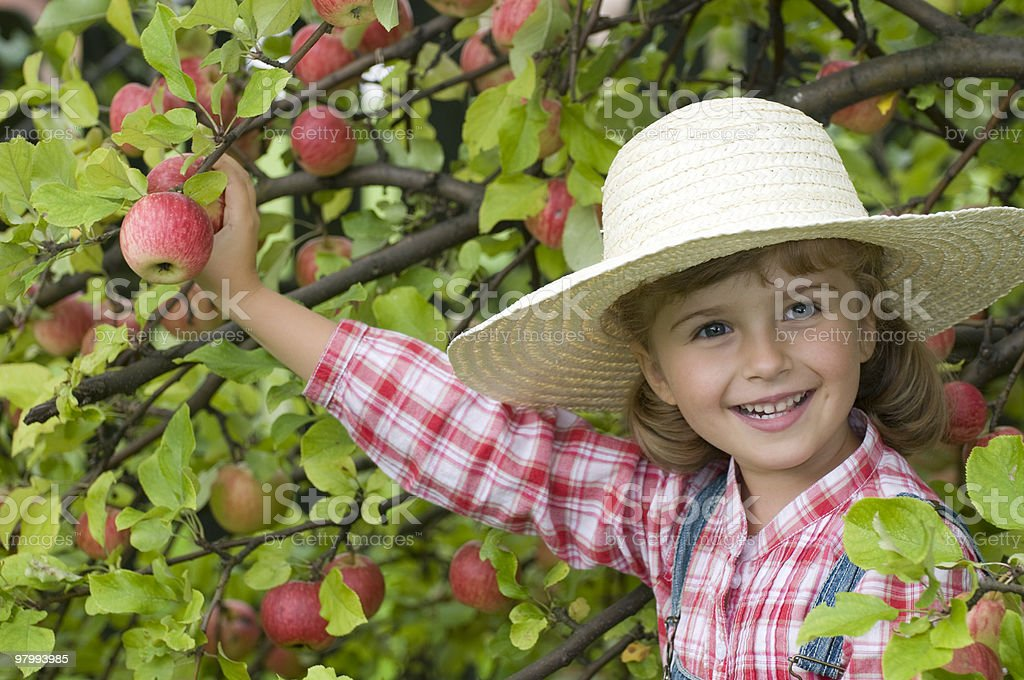 Little white girl with hat picking fruits from branches royalty-free stock photo