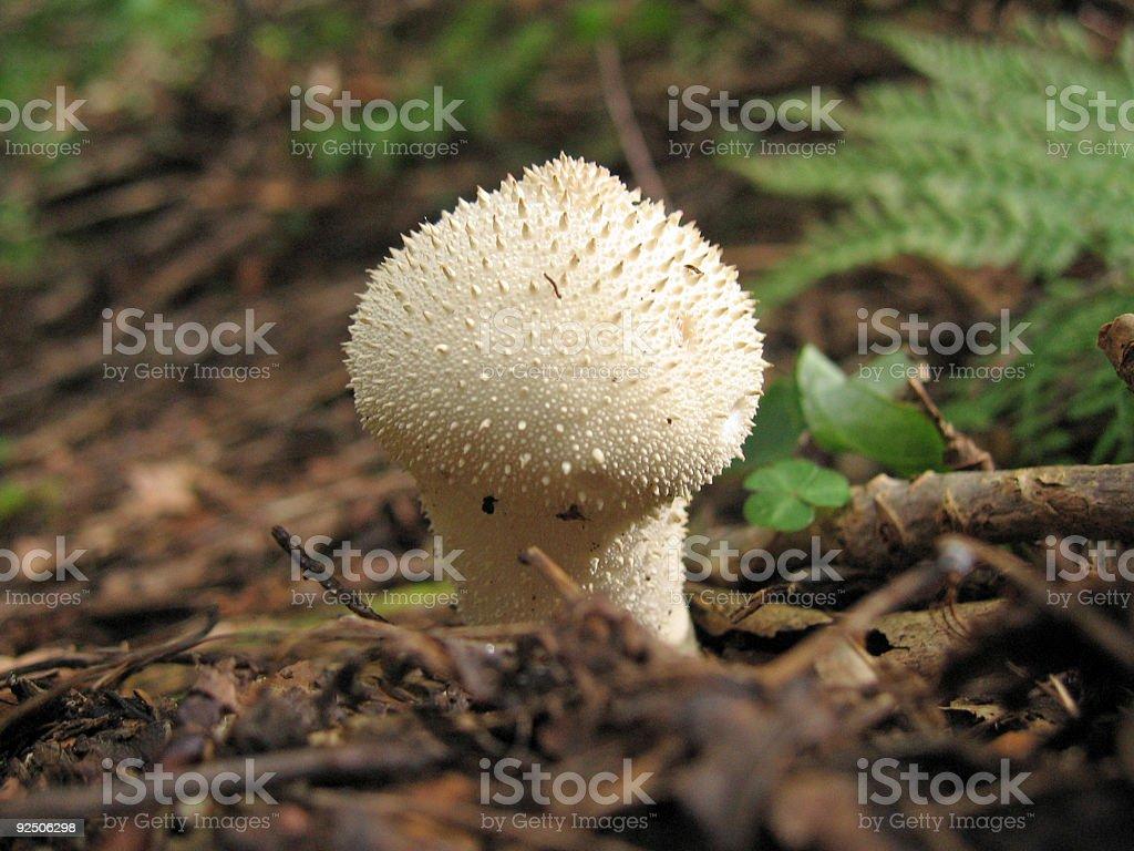 Little white mushroom royalty-free stock photo