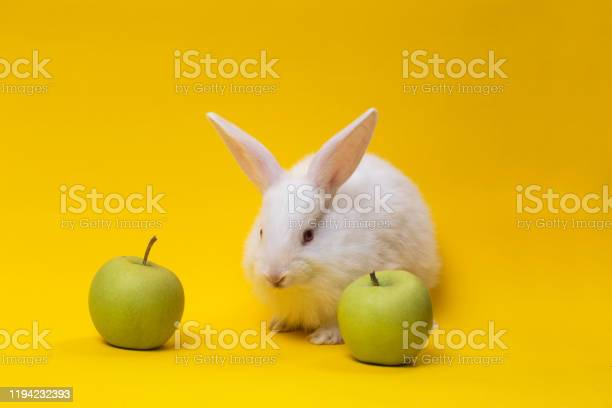 Little white rabbit with the apple picture id1194232393?b=1&k=6&m=1194232393&s=612x612&h=tsuv5mxtgxndt e5ikpt1eczmmnshz7erkgerbhx4r8=
