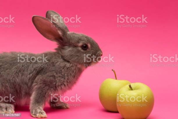 Little white rabbit with the apple picture id1194232597?b=1&k=6&m=1194232597&s=612x612&h=kncc5xcdolt2ezxk5bxyzo uhzikzndkqdwbkd oi e=