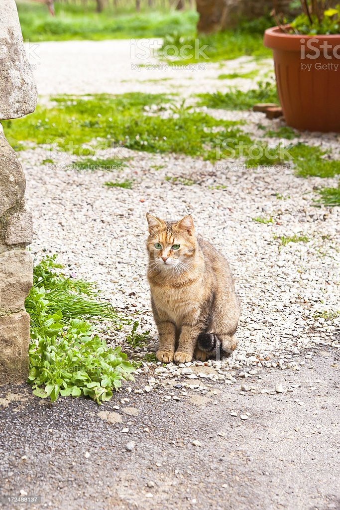 Little wild cat with green eyes royalty-free stock photo