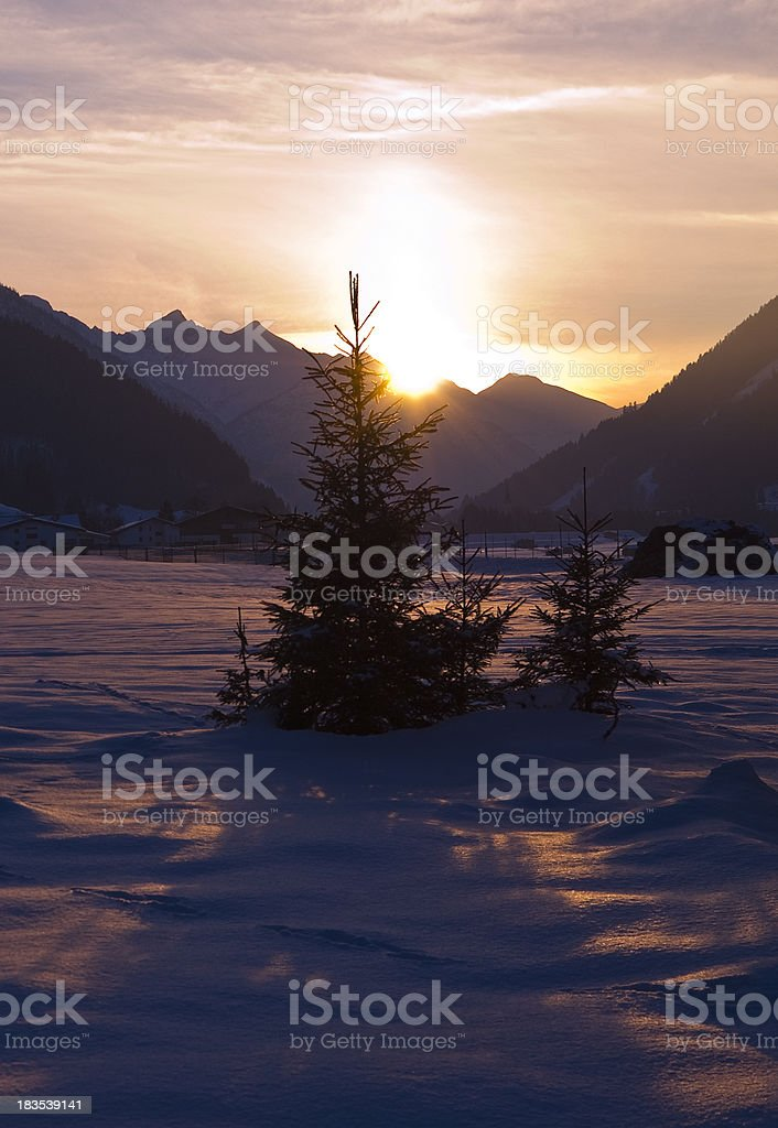 Little winter tree in the warm violet sun royalty-free stock photo