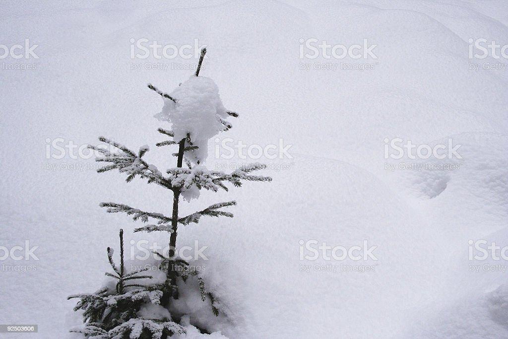little xmas tree royalty-free stock photo