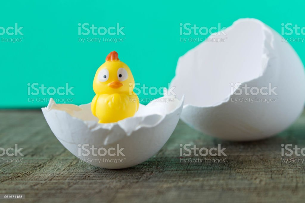 A little yellow toy chicken in an eggshell. On turquoise background royalty-free stock photo