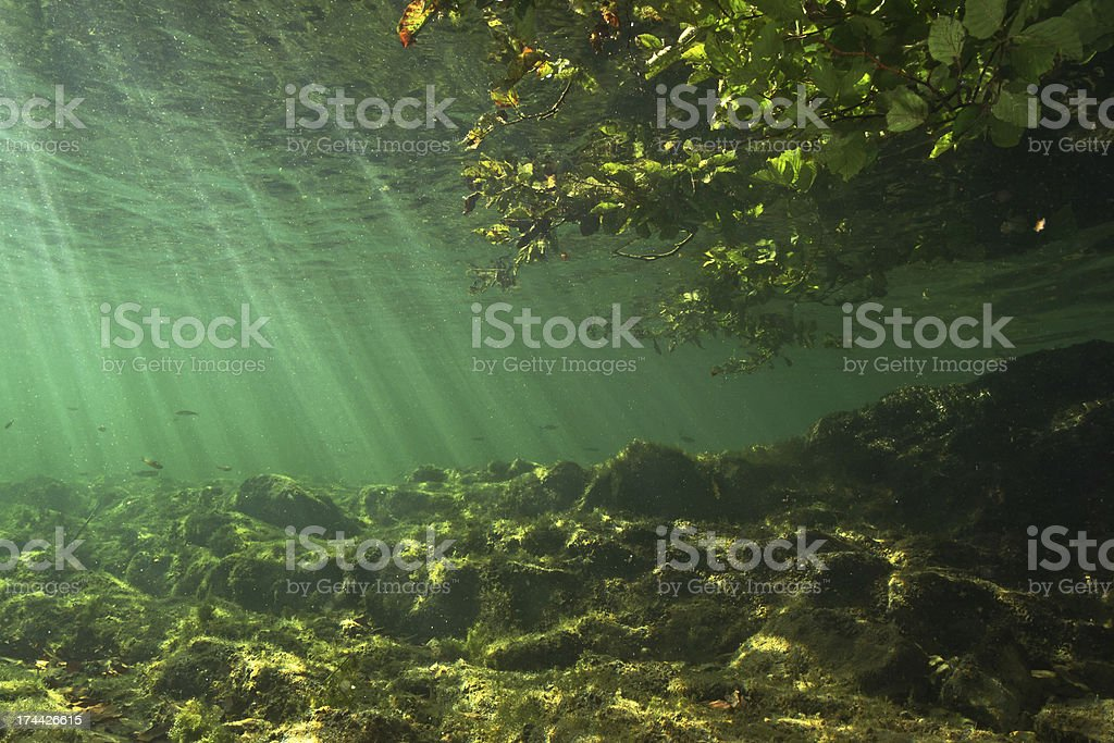 Littoral zone underwater stock photo