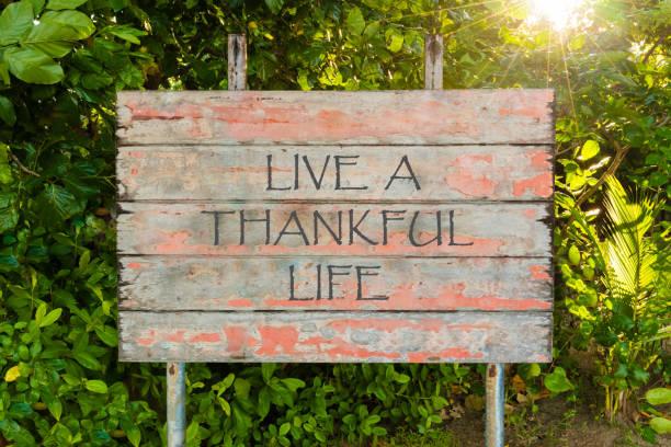 live a dankbar life motivierenden zitat geschrieben am alten vintage board-schild im wald, mit sonnenstrahlen im hintergrund. - danke zitate stock-fotos und bilder