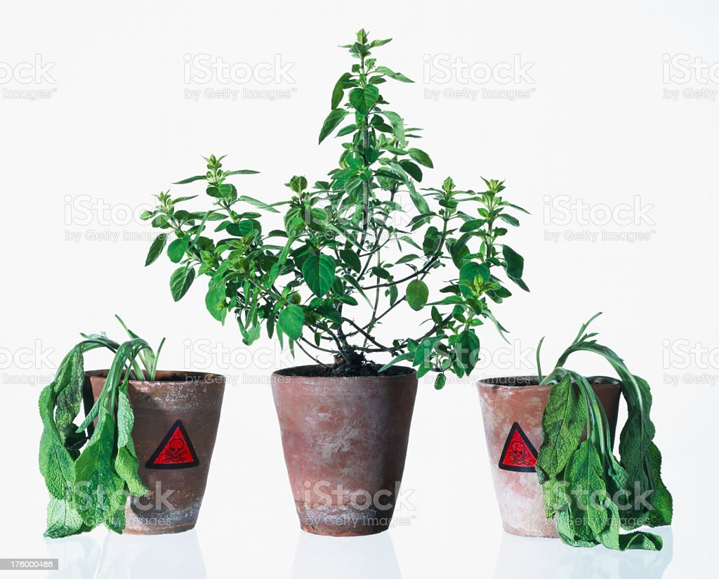 Live and dead plant. stock photo
