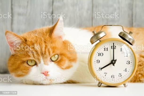 Live and mechanical alarm clock for waking up in the morning picture id1006817326?b=1&k=6&m=1006817326&s=612x612&h=u9tijhtynb7b1idofjmw gxpnerglgqak7chn5fdgnu=