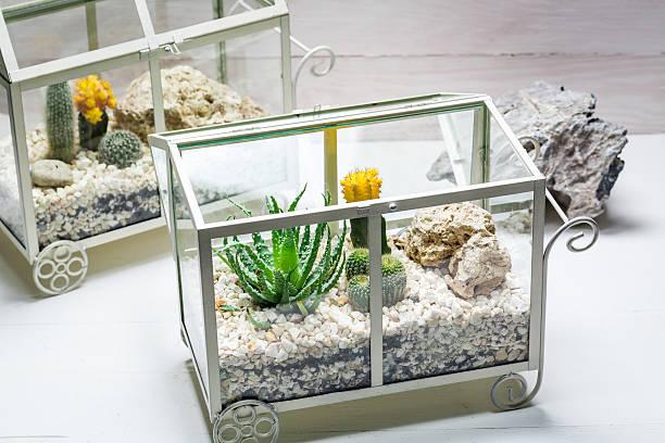 live cactus in a terrarium with self ecosystem - terrarienpflanzen stock-fotos und bilder