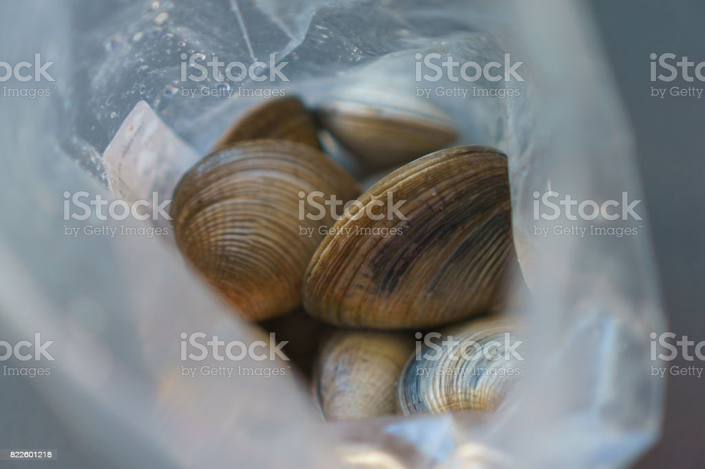 Live Clams in a Plastic Bag stock photo