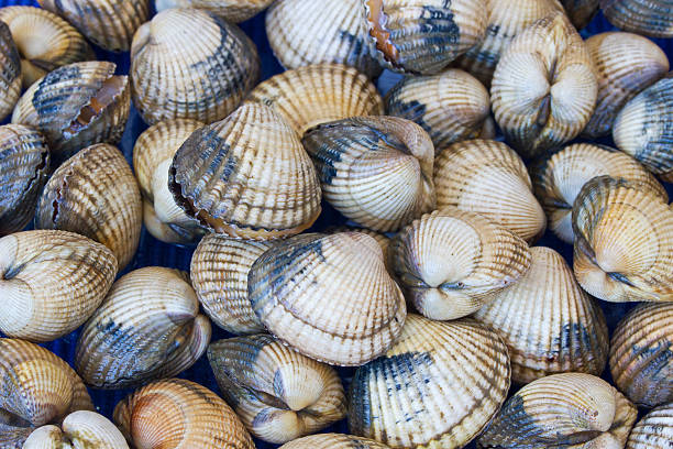 Live cockles stock photo