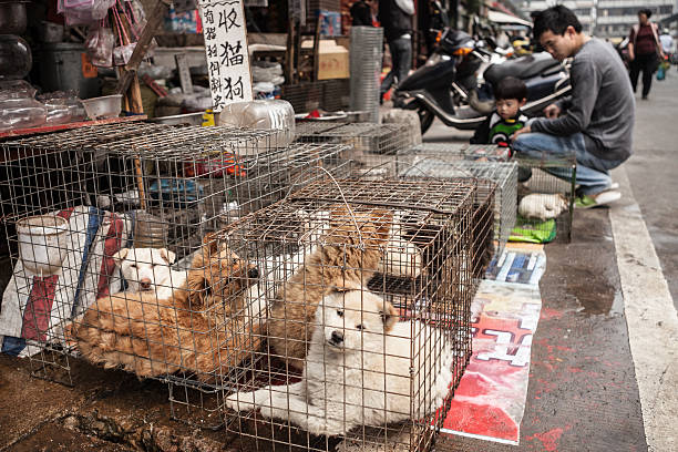 Live dogs for sale in China stock photo