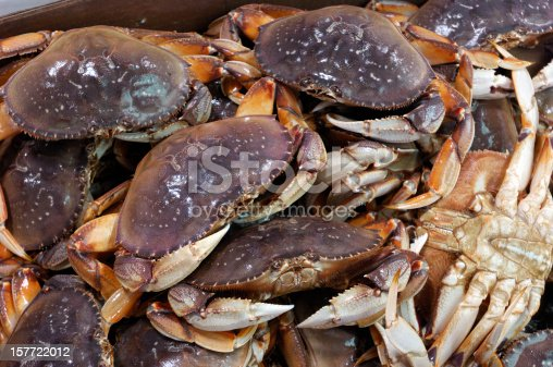 Live dungeness crabs (Metacarcinus magister)  boxed and ready for market.