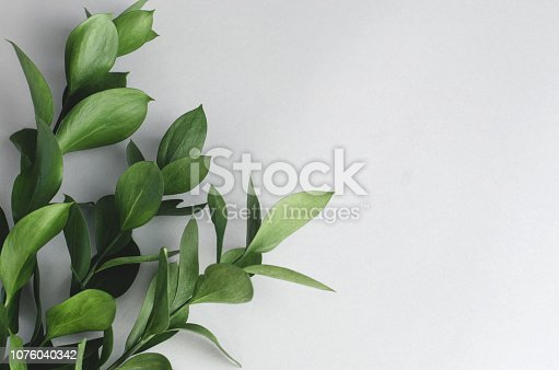 istock Live green leaves on a gray background. 1076040342