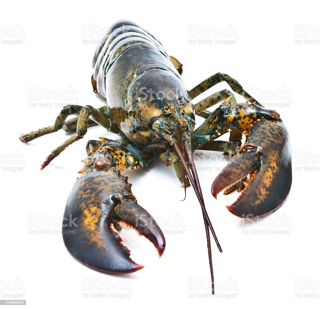 Live Lobster Stock Photo - Download ...