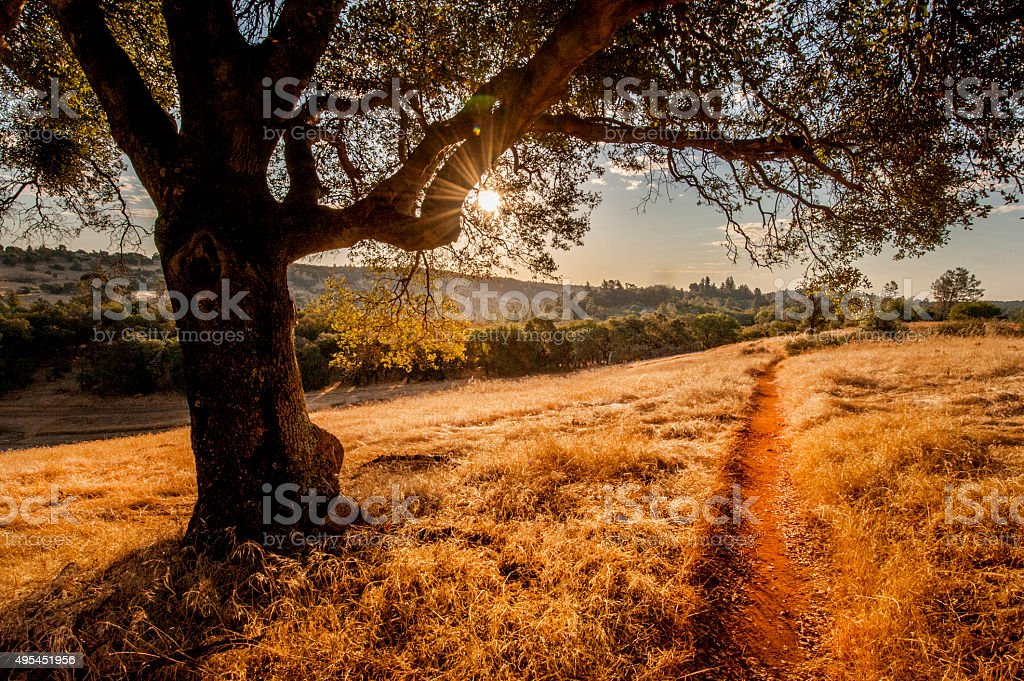A trail leads off into a grassy meadow with a silhouetted Live Oak on...