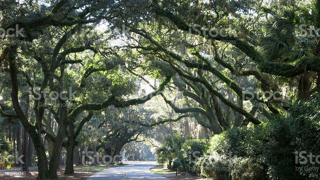 Live Oak Trees Canopy Hilton Head Island Road, South Carolina - Royalty-free 2015 Stock Photo