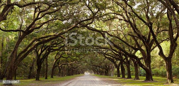 Road through Live Oak trees near Savannah, Georgia, USA.