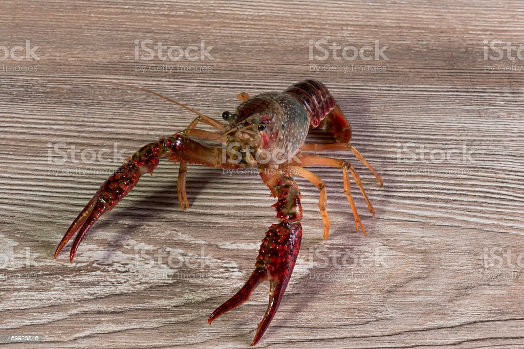 live shrimp on wooden table stock photo