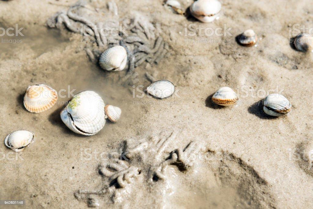 Berberechos animados y estirón gusano fundido en arena de mar de Wadden - foto de stock