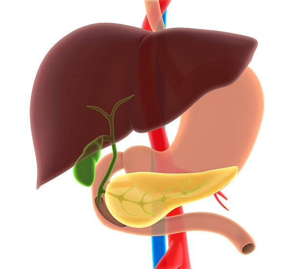 fígado, biliar e pâncreas humano - vesicula biliar - fotografias e filmes do acervo