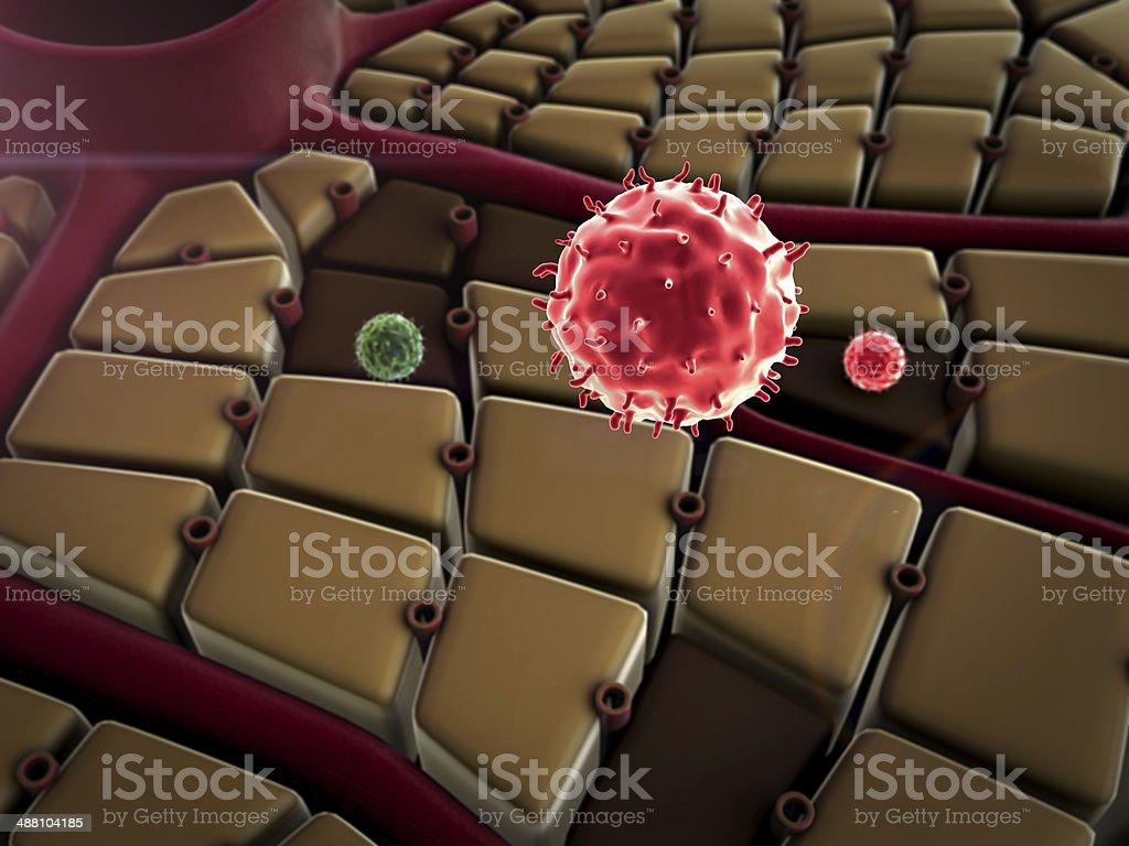 liver, Macrophage stock photo