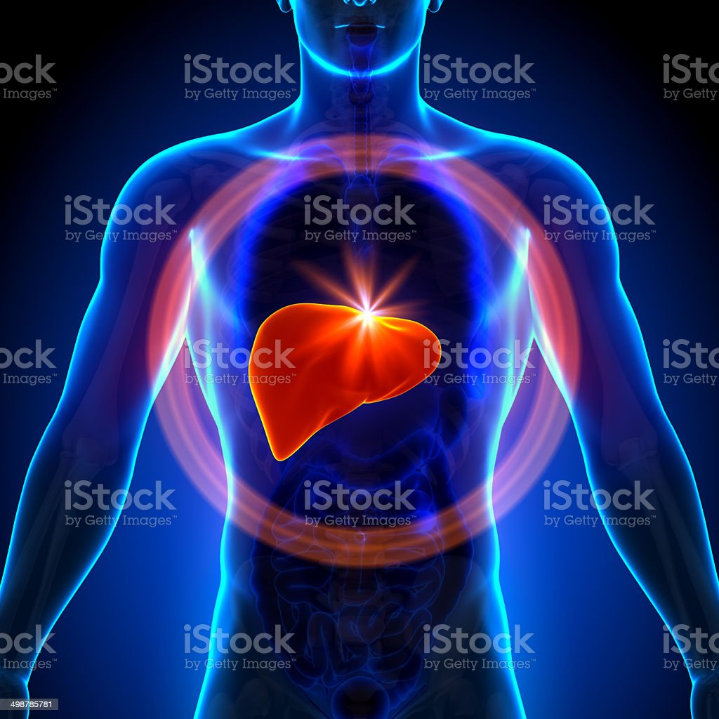royalty free human liver pictures images and stock photos