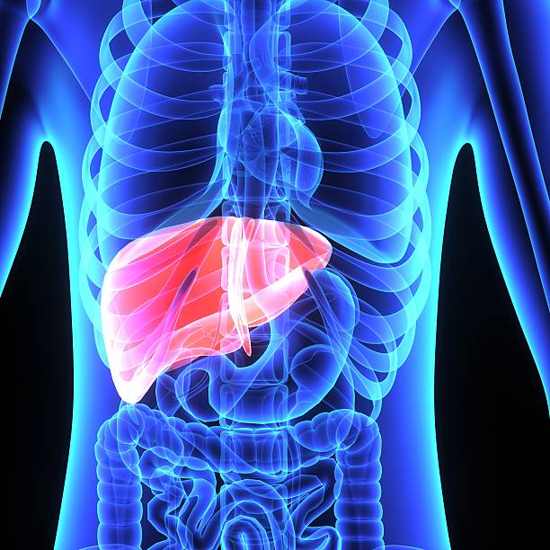 Liver stock photo