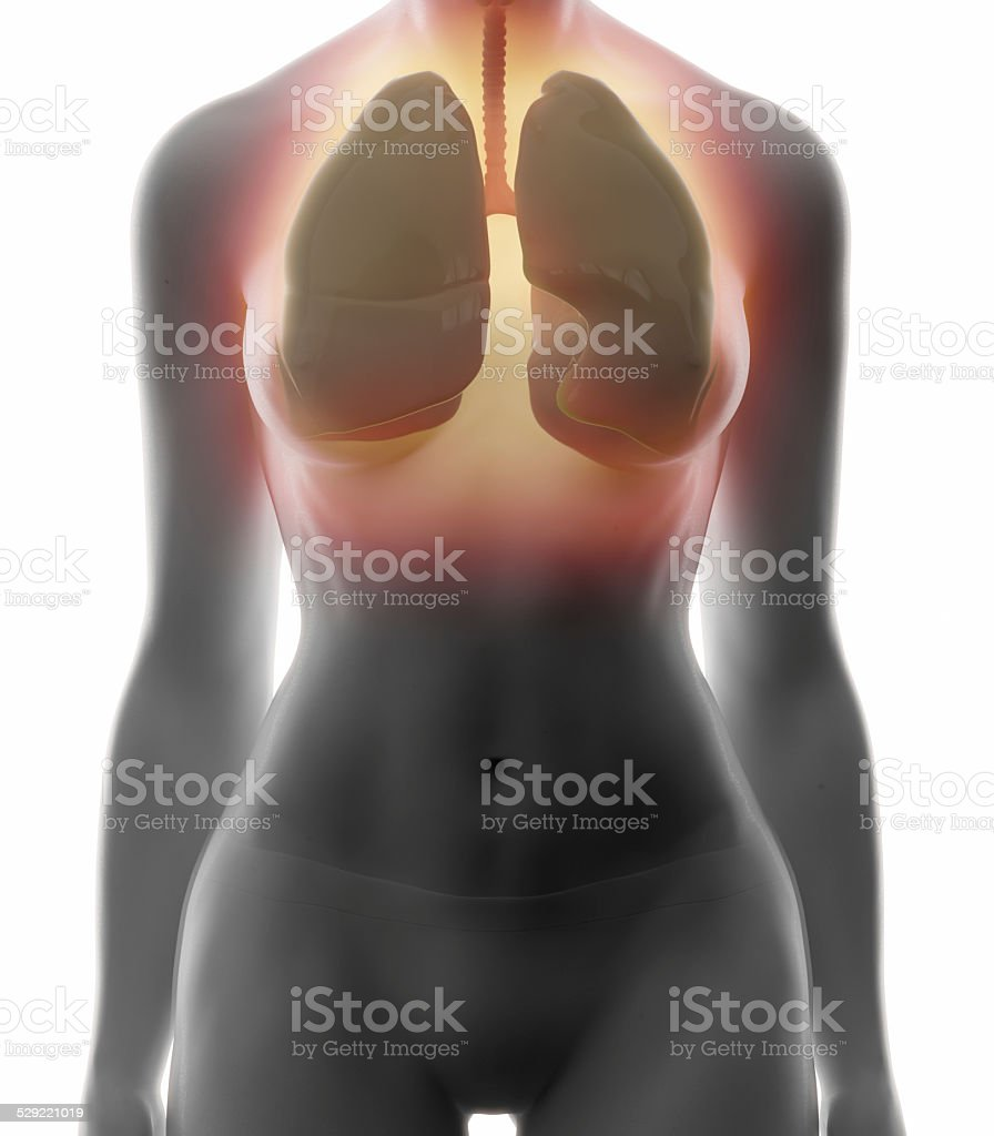 Liver Real View Female Anatomy Concept Stock Photo & More Pictures ...