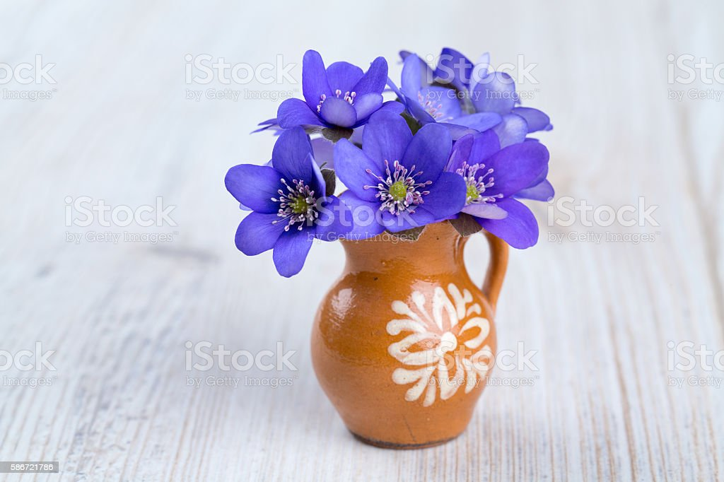liverwort flowers on wooden surface stock photo
