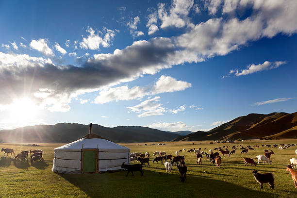 Livestock in a pasture around haystack on partly cloudy day The sun rises in the Orkhon Valley while lambs graze freely independent mongolia stock pictures, royalty-free photos & images