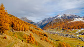 Autumn Theme in Livigno - Italy