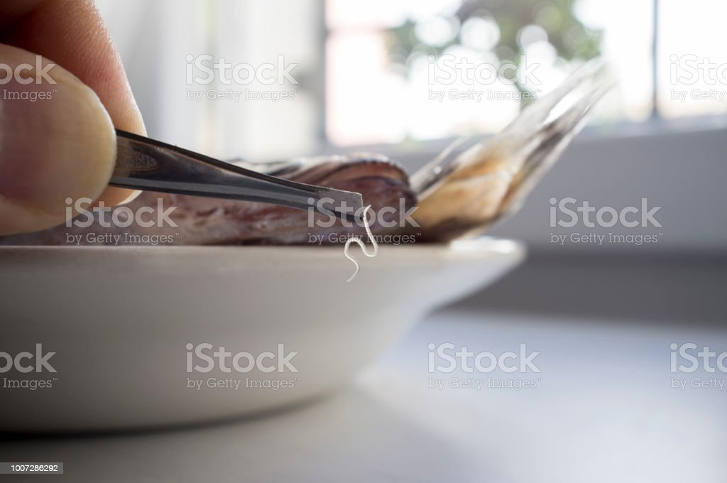 Living anisakis worm just found on raw fish stock photo