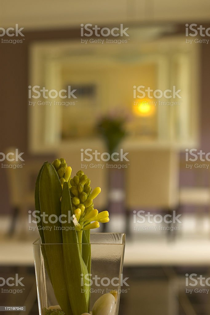 Living Colour royalty-free stock photo
