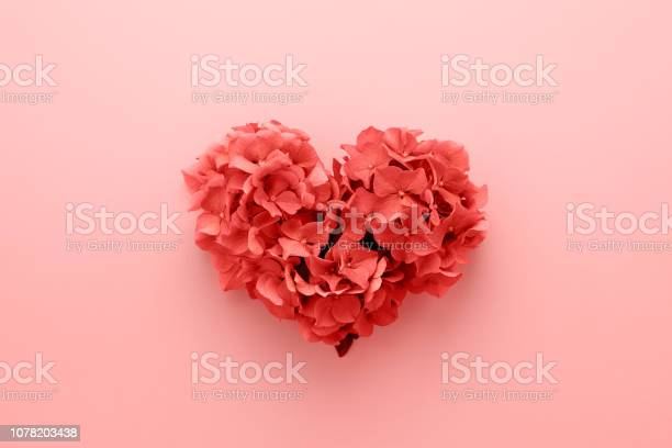 Living coral color of the year 2019 heart shape made of flowers picture id1078203438?b=1&k=6&m=1078203438&s=612x612&h=wuwnqxotcr i8hwhdhiky75ivoqubh p71hvogr1 tk=